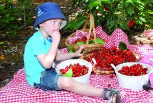 festival des cerises